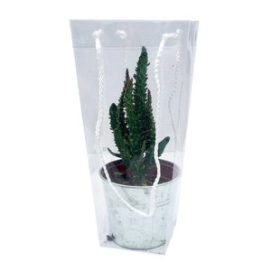 Cactus gemengd zink in draagtasje