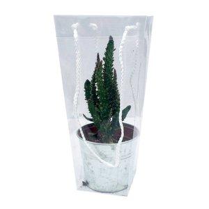 Cactus gemischte Zink im Koffer