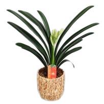 miniata water hyacinth basket (orange)