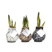 Amaryllis Kein Wasser, Blumen Waxz® Kunst Rembrandt