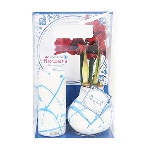 Amaryllis Amaryllis Fleurs d'eau sans cire Art Holland