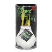 Amaryllis No Water Flowers Glowz® in Koker