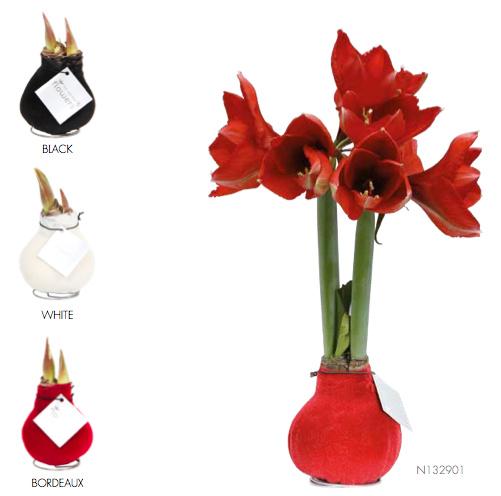amaryllis velvet touch florastore. Black Bedroom Furniture Sets. Home Design Ideas