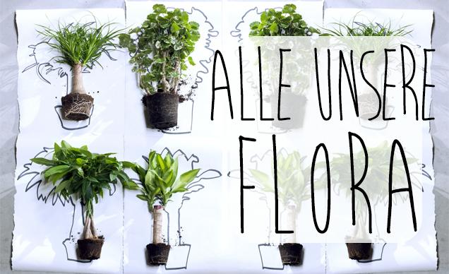 Höchster Qualität Pflanzen Kaufen! banner 2