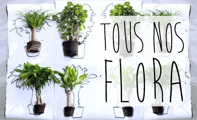 Acheter des plantes d 39 int rieur haut de gamme florastore for Acheter plante interieur