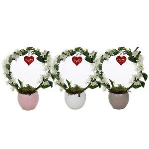 Dendrobium Dendrobium nobile, Création Lisa '' Bow « (+ coeur)
