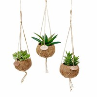 Kokodama Succulents mixed 8 kinds of hanging