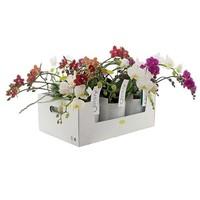 Phalaenopsis 3+ tak Bright Boost in style glas gemengd