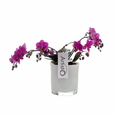 Phalaenopsis Artisto deco 4 branch in style glass