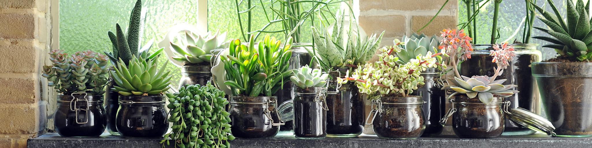 Best quality plants online! banner 3