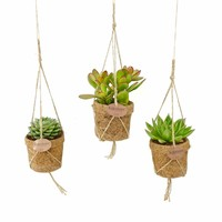 Kokodama Succulents mixed 3 kinds of hanging