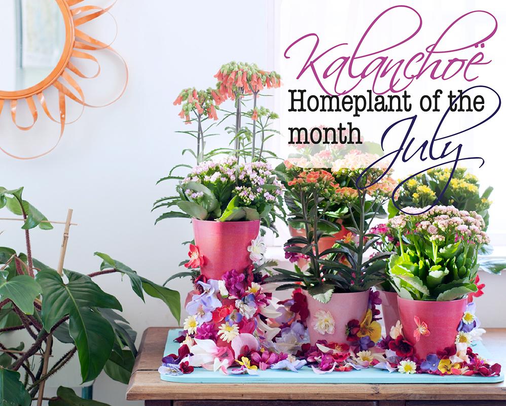 Acheter des plantes d 39 int rieur haut de gamme florastore for Solde plante interieur