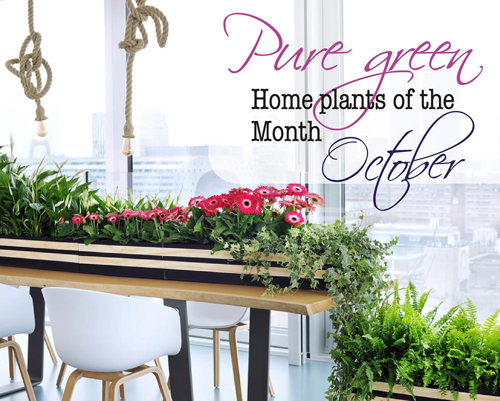 acheter des plantes d 39 int rieur haut de gamme florastore