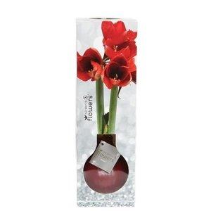 Amaryllis Fleurs sans eau Waxz® Luxery Box