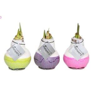 Amaryllis Kein Wasser Farbe Blumen Waxz® Dipz