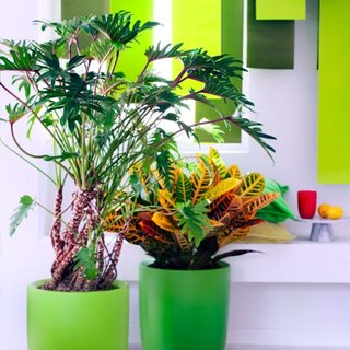 La plante du mois