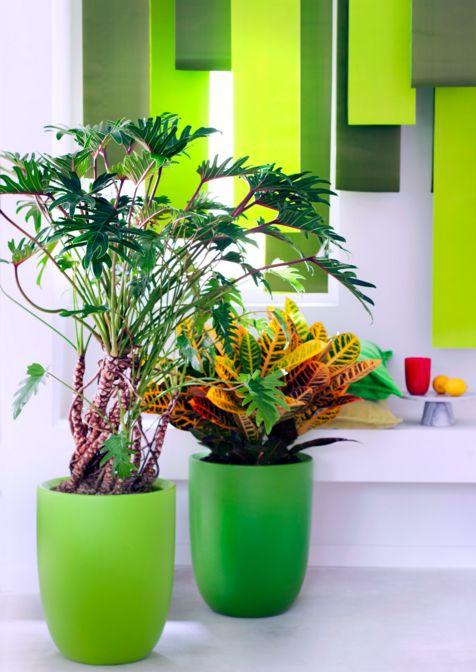 Männer Pflanzen