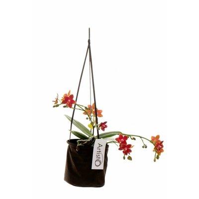 Phalaenopsis Art Neo vierte Zweig