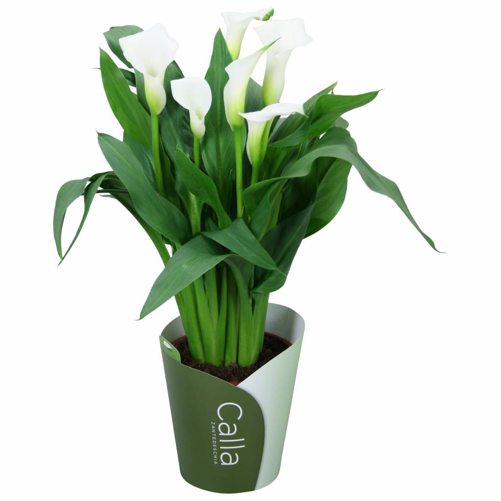 Houseplant Accessories Html. Houseplant. Remodeling And ... on