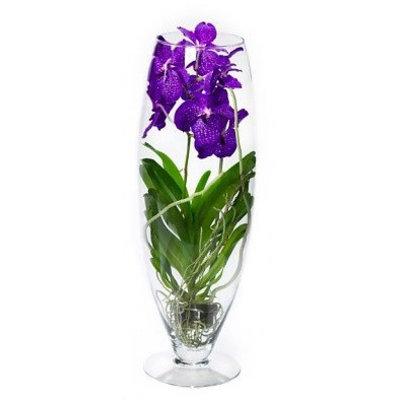 Vanda schöne Orchidee exklusives Champagner-Glas