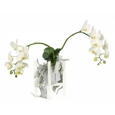 Phalaenopsis Liv dans la cire