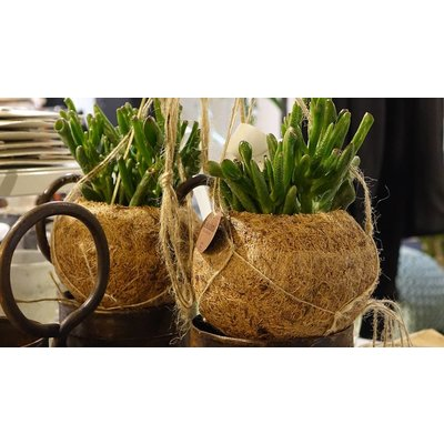 Kokodama hanging pot 12cm dia. - Copy