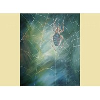 Als een spin in een web