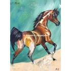 Arabisch Paard QR Marc