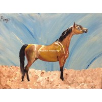 Arabisch Paard Pinga