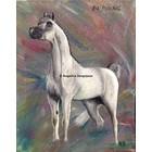 Arabisch Paard PA Paschal