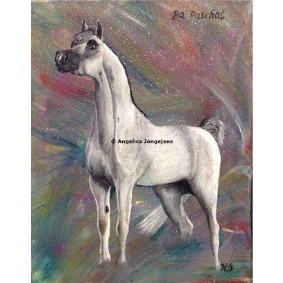 Arabisch Paard PA Paschal - Angelica Jongejans