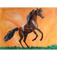 Arabisch Paard MCA Magnum Gold