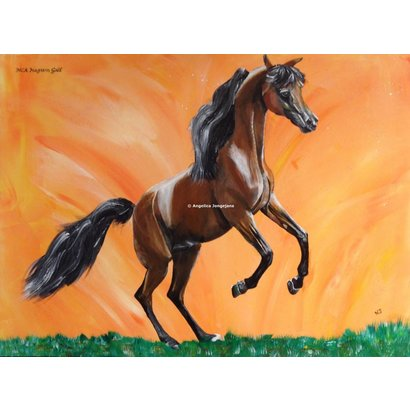 Arabisch Paard MCA Magnum Gold - Angelica Jongejans