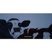 Zwart-bonte koeien