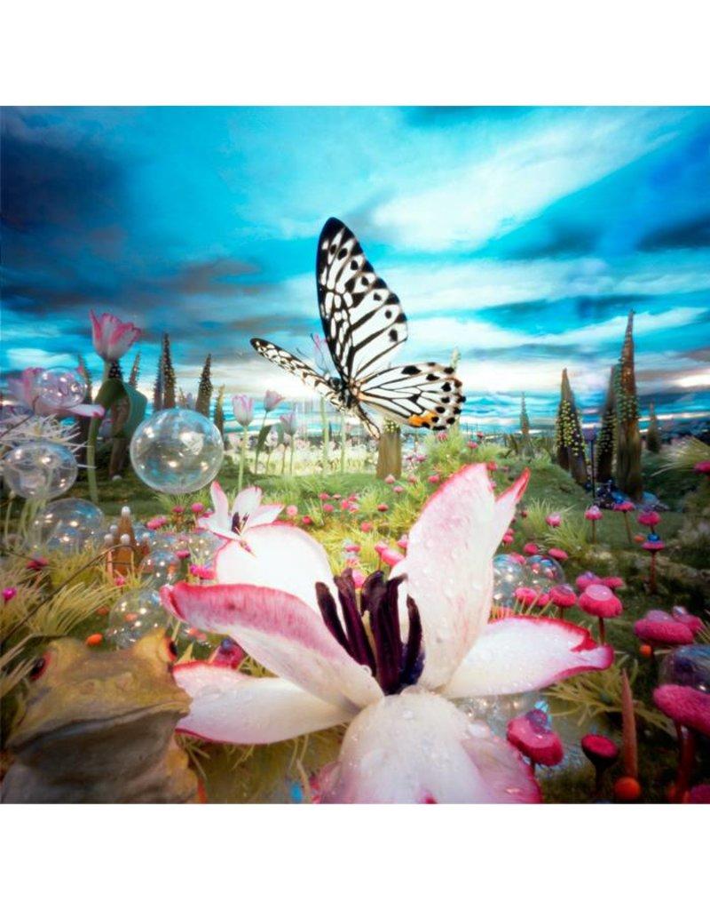 Bethany de Forest Tulpvlinder Idee