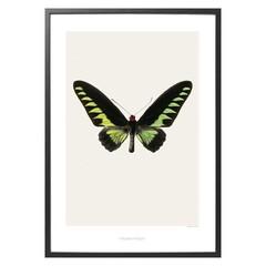 Hagedornhagen poster S5 met vlinder