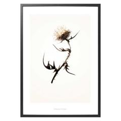 Hagedornhagen poster G2 met distel
