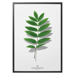 Hagedornhagen Poster Folium F1 50x70