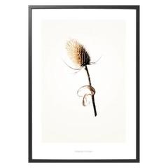 Hagedornhagen poster Gold G3 met distel