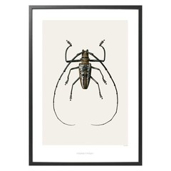 Hagedornhagen Poster with insect B2