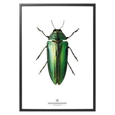 Hagedornhagen Poster - kaart met groene kever B9