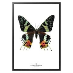 Hagedornhagen Poster of kaart met vlinder S14
