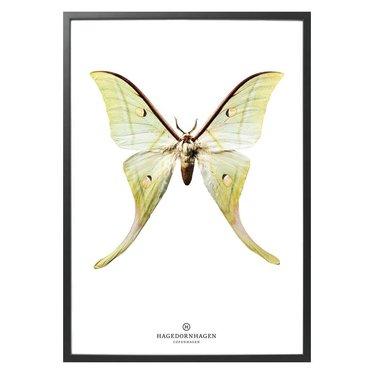Hagedornhagen Poster met vlinder S15