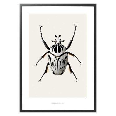 Hagedornhagen Poster B8 Goliathus orientalis -Goliathkever (42x59)