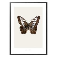 Hagedornhagen poster S11 vlinder