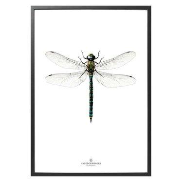 Hagedornhagen Poster with dragonfly L1 NEW