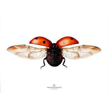 Hagedornhagen Poster - kaart met lieveheersbeestje L1 NEW - Copy