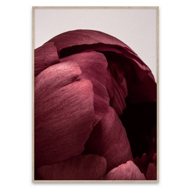 Paper Collective Poster Peonia 01