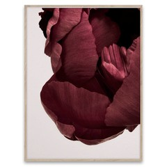 Paper Collective poster Peonia 02
