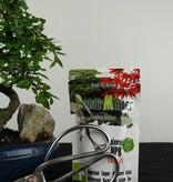 Bonsai Geschenk Chin. Ulme, nr. G38